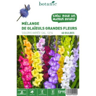 40 bulbes de Mélange de Glaïeul Grandes Fleurs en panier – Couleurs Variées 310353