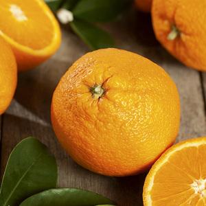 Oranger bio. Le pot de 3 litres 310410