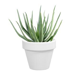 Pot horticole en terre cuite émaillée Blanc - D10 x H8.5 310762