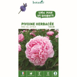 Pivoine herbacée rose - 1 bulbe calibre 1 315767