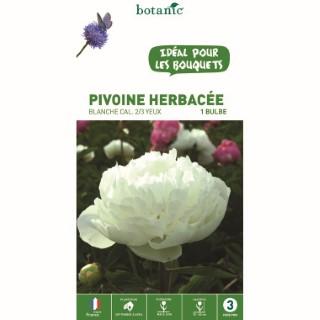 Pivoine herbacée blanche - 1 bulbe calibre 1 315768