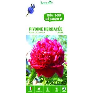 Pivoine herbacée rouge - 1 bulbe calibre 1 315769