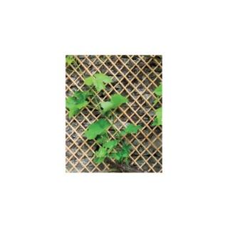 Treillis Wick Trellis en osier naturel, 100 x 200 cm 330739