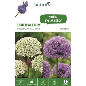 Bulbe duo d'allium violet et rose botanic® x 6 334576