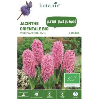 Bulbe jacinthe pink pearl bio rose botanic® x 3 334578