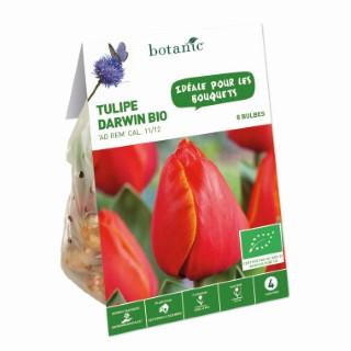 Bulbe tulipe darwin hybrid ad rem rouge et jaune bio botanic® x 8 334592