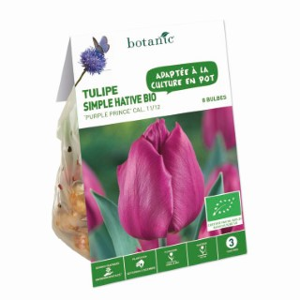 Bulbe tulipe simple hative purple prince violet bio botanic® x 8 334601
