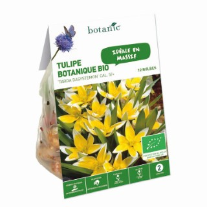 Bulbe tulipe botanique tarda dasystemon jaune bio botanic® x 12 334630