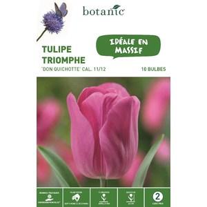 Bulbe tulipe triomphe Don Quichotte rose bio botanic® x 10 334634