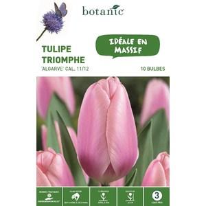 Bulbe ulipe triomphe algarve rose bio botanic® x 10 334635