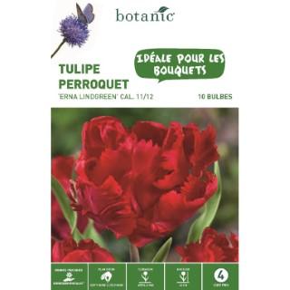 Bulbe tulipe perroquet erna lindgreen rouge botanic® x 10 334638
