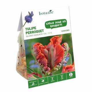 Bulbe tulipe perroquet blumex favourite orange botanic® x 10 334640