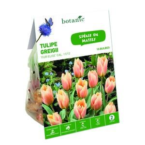 Bulbe tulipe greigii fur elise saumon botanic® x 10 334645