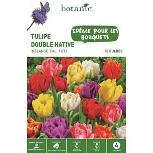Bulbe tulipe double hative en mélange multicolore botanic® x10 334653