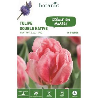 Tulipe double hâtive Foxtrot rose botanic® - 10 bulbes 334654