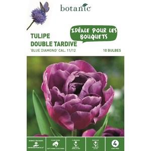 Bulbe tulipe double hative blue diamond violet botanic® x 10 334662
