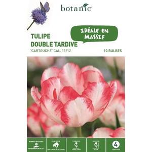 Bulbe tulipe double hative cartouche blanc et rouge botanic® x 10 334664