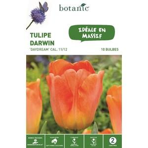 Bulbe tulipe darwin hybride daydream orange botanic® x 10 334669
