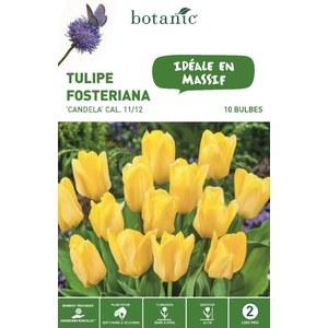 Bulbe tulipe fosteriana candela jaune botanic® x 10 334671
