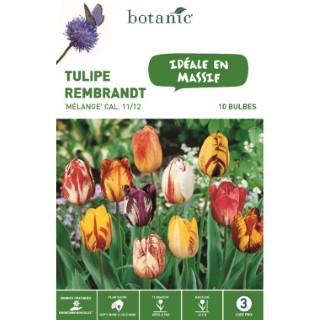 Tulipe rembrandt en mélange botanic® - 10 bulbes 334674