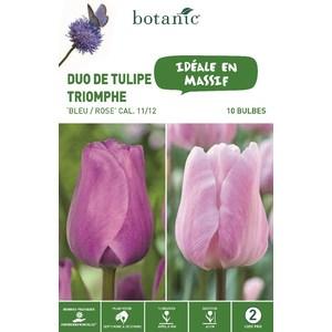 Bulbe duo de tulipe triomphe bleu et rose botanic® x 10 334685