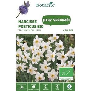 Bulbe narcisse poeticus recurvus blanc bio botanic® x 6 334696