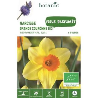Bulbe narcisse grande couronne red ranger jaune bio botanic® x 6 334698