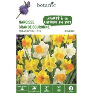 Bulbe narcisse grande fleur en mélange multicolore botanic® x 8 334716