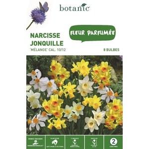 Bulbe narcisse jonquille en mélange multicolore botanic® x 8 334717