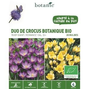 Bulbe duo de crocus botanique bleu et jaune bio botanic® x 20 334728