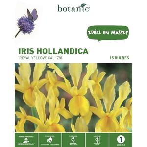 Iris jaune de Hollande 15 bulbes de calibre 7 à 8 – 1 m 334735