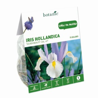 Iris multicolore de Hollande 15 bulbes de calibre 7 à 8 – 1 m 334737