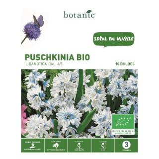 Puschkinia Libanotica bleu clair bio botanic® - 10 bulbes 334933