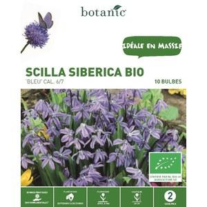 Bulbe scilla siberica bleue bio botanic® x 10 334938
