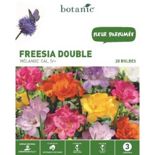 Freesia double en mélange botanic® - 20 bulbes 334945