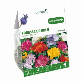 Bulbe freesia simple en mélange multicolore botanic® x 20 334946