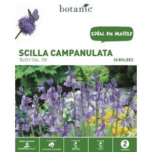 Bulbe scilla campanulata bleue botanic® x 10 334987