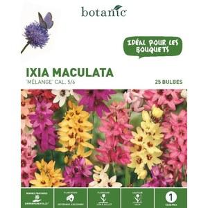 Ixia hybride en mélange botanic® - 25 bulbes 334995
