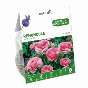 Renoncule asiatique rose botanic® - 15 bulbes 335026