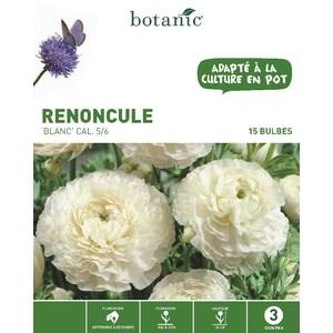 Renoncule asiatique blanc botanic® - 15 bulbes 335027