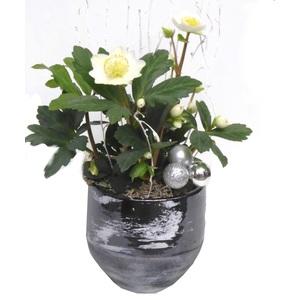 Rose de Noël pot décor feuille. Le pot 342686
