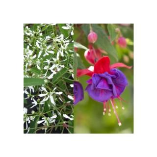 Fuchsia + euphorbe. Le pot déco de 15 litres 343169