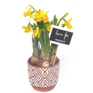 Narcisse tête à tête. Pot terre cuite décoré 353843