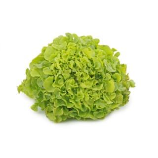 Salade batavia bio de France - Prix à la pièce 361582