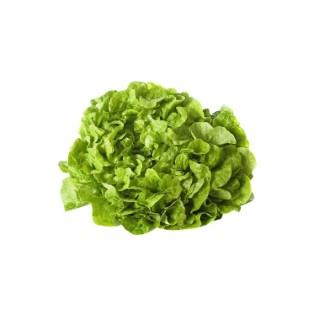 Salade feuille de chêne bio – Prix à la pièce 361584