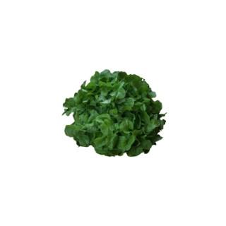 Salade feuille de chêne bio de France – Prix à la pièce 361584