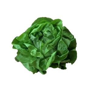 Salade laitue bio de France - Prix à la pièce 361586
