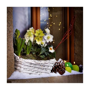 jardini re de no l la jardini re de 40 cm les pr ts poser balcon terrasse botanic. Black Bedroom Furniture Sets. Home Design Ideas