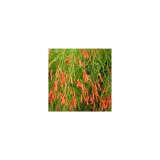 Russelia rouge en suspension Ø 27 cm 371011