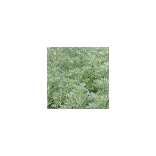 Armoise vivace. Le pot de 1,6 litre 371257
